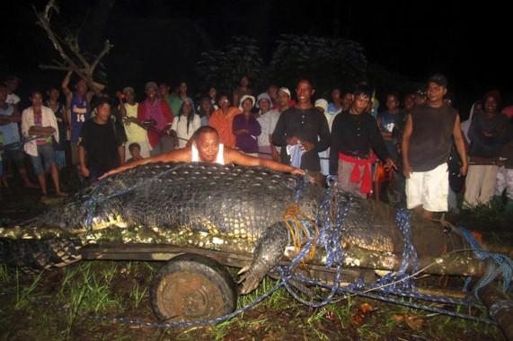 El cocodrilo marino en cautiverio más grande del mundo murió el domingo