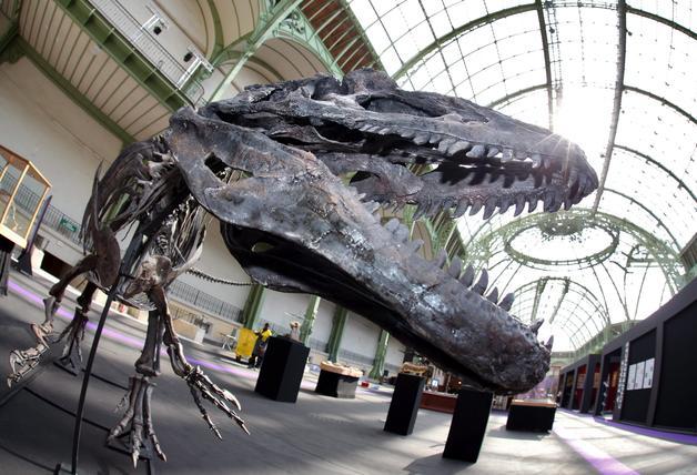 Imagen de archivo del esqueleto de un dinosaurio Allosaurus, expuesto en el Grand Palais de París, Francia. EFE