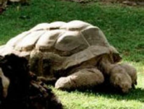 tortuga egipcia murió a los 270 años de edad