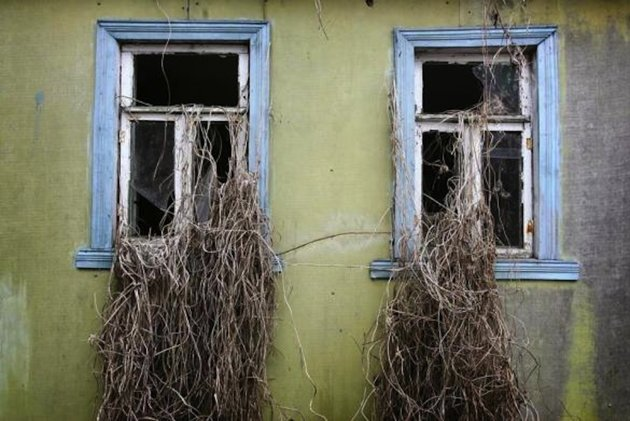 Wild plants grow through widows of an abandoned house in the 30 km (19 miles) exclusion zone around the closed Chernobyl nuclear power plant. REUTERS/Damir Sagolj