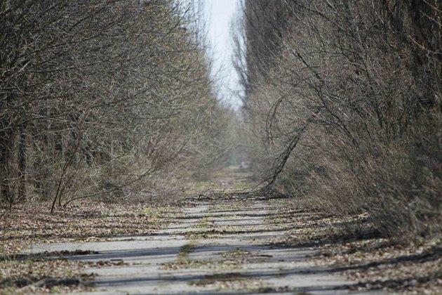 Una vista de la ciudad abandonada Pripyat cerca de la planta nuclear de Chernóbil. REUTERS/Gleb Garanich