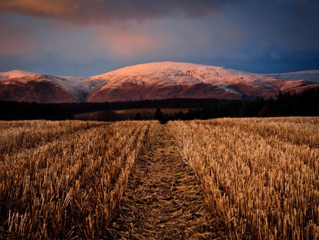 Un campo escocés | Tonto McDuff