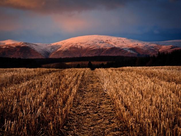 Un campo escocés   Tonto McDuff