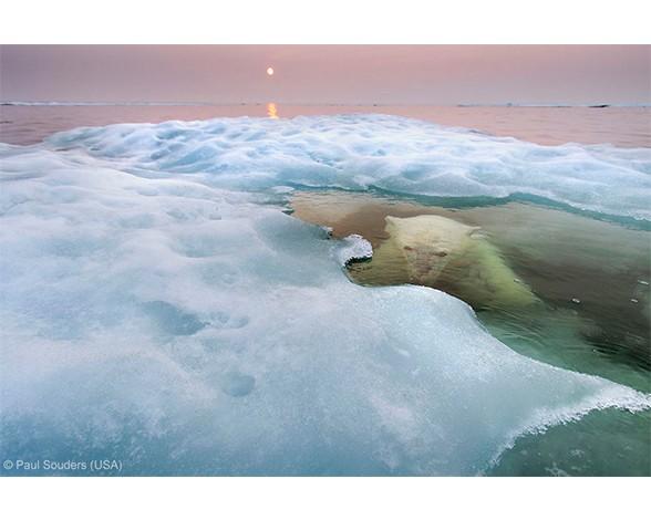 """Los osos polares son animales que pasan mucho tiempo bajo el agua, a veces horas nadando en busca de focas. Paul Solders captó a este ejemplar con su cámara en uno de esos instantes en que buceaba. La foto ha obtenido el primer premio en la categoría """"Animales en su medio""""."""