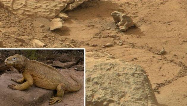 Según publica RT citando a diferentes medios, la imagen podría ser una iguana fosilizada en la superficie marciana.