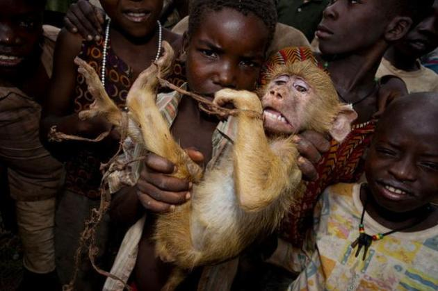 """Un mono aterrorizado Sorprendente fotografía en la que unos niños africanos habían atado un babuino. El hábitat de los animales es destruido por el ser humano y los monos son saqueados en busca de comida en el campo. """"La expresión en la cara del mono decía mucho"""", opinaba el fotógrafo."""
