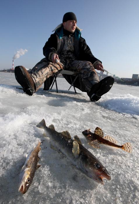 A pesar de todas las dificultades, los pescadores experimentados y pacientes siempre pueden pescar una perca, un lucio, un rutilo o un barbo. A veces estos peces se mueven en busca de mejor oxígeno o alimento. FOTO: RIA Novosti